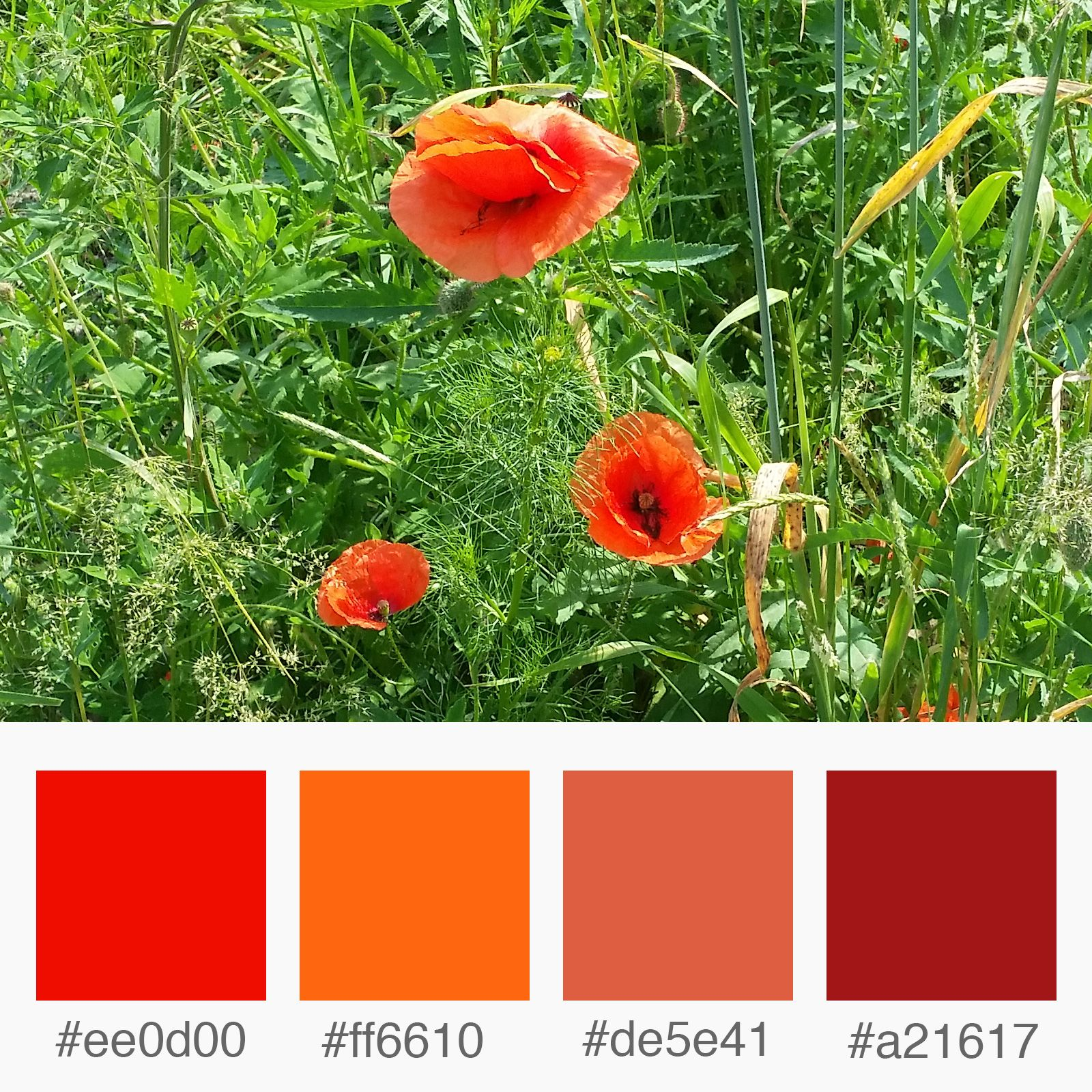 Weekly Colours Inspiration Poppy Flower Shades Of Red Color