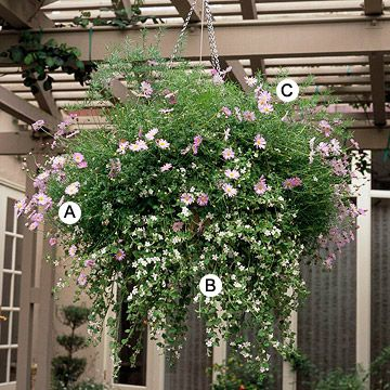 pretty hanging basket with asparagus fern