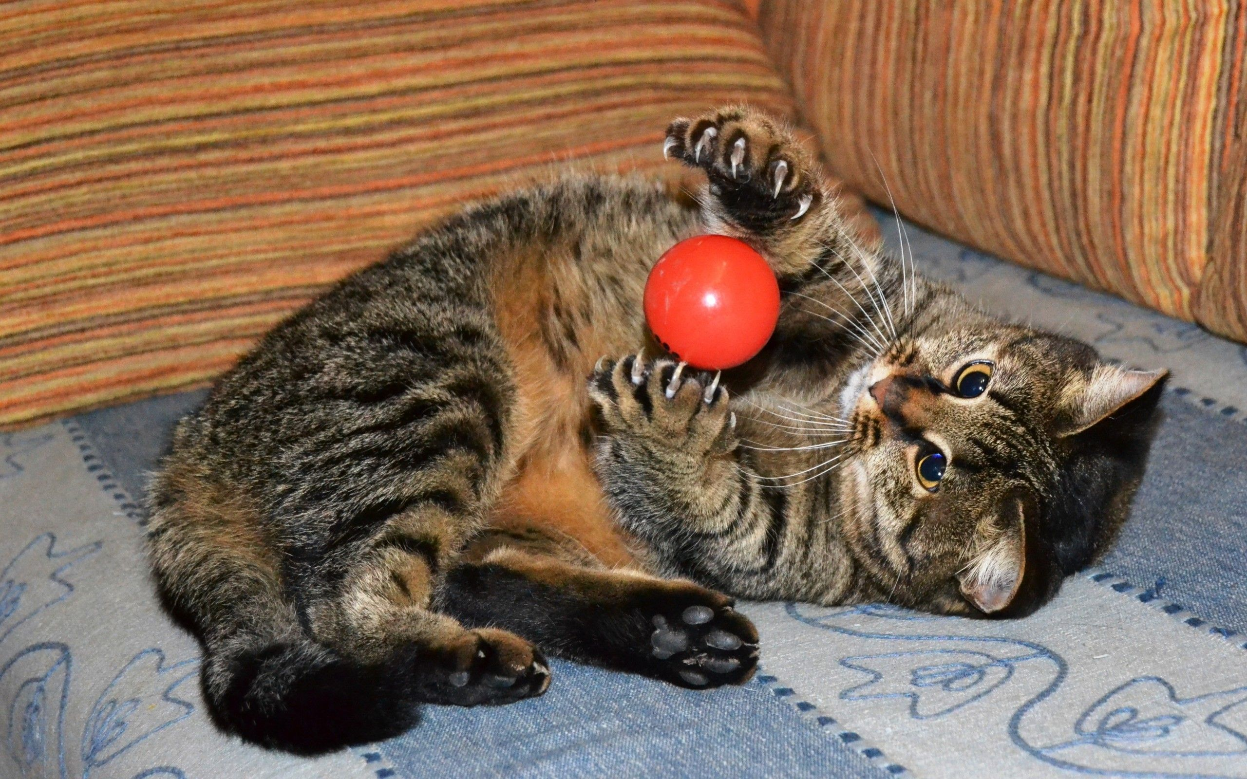 Cat Playing With Ball Wallpaper 43123 Cat Playing Why Do Cats Purr Evil Cat