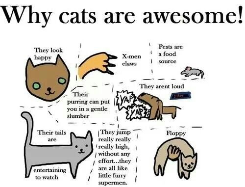 Why cats are awesome...