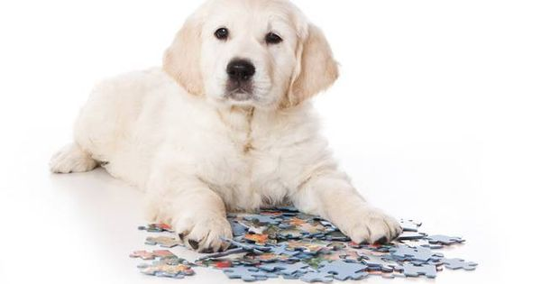 These popular kids' games are also perfect learning tools to keep your dog's mind active.