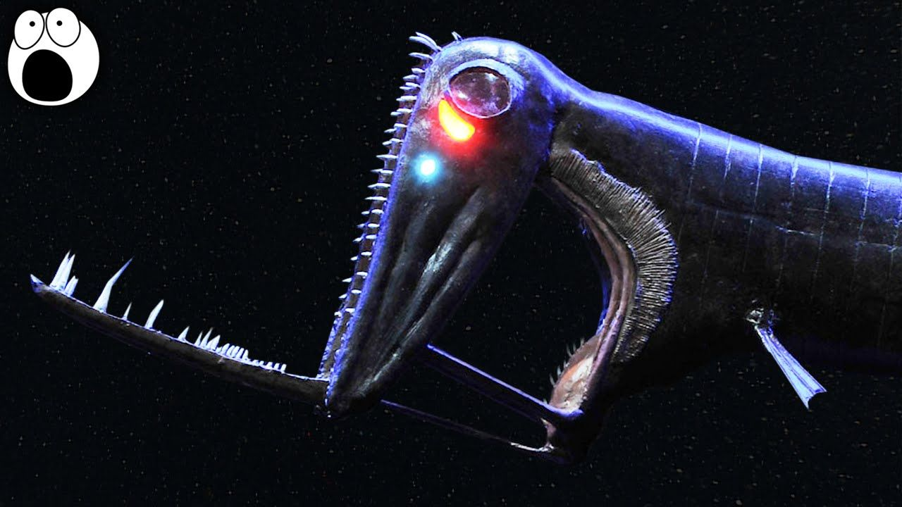 Image result for weird deep sea creatures