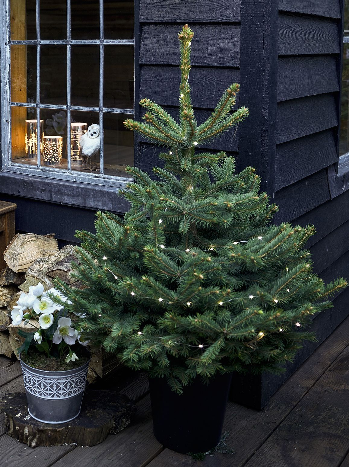 How to care for your potted Christmas tree | Potted christmas trees, Christmas tree care, Live ...