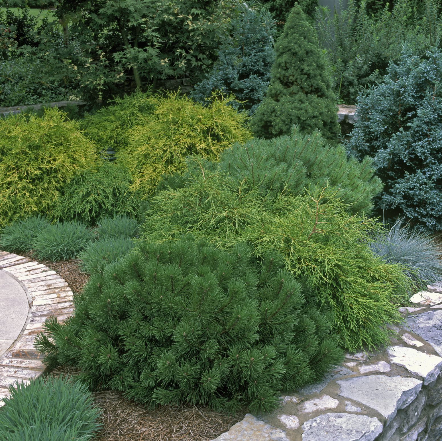 Here Are the Best Evergreens for Adding YearRound Beauty to Your Backyard is part of Evergreen bush, Evergreen shrubs, Small evergreen shrubs, Dwarf evergreen shrubs, Evergreen flowers, Evergreen landscape front yard - Every single garden needs these evergreen bushes