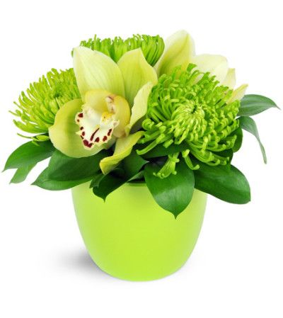 Being green has never been easier! Green Fuji mums and green cymbidium orchids are a perfectly modern way to celebrate spring and summer cheer.