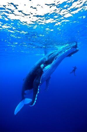baleine à Moorea http://media-cdn.tripadvisor.com/media/photo-s/03/1c/c4/7d/moorea-boat-tours.jpg