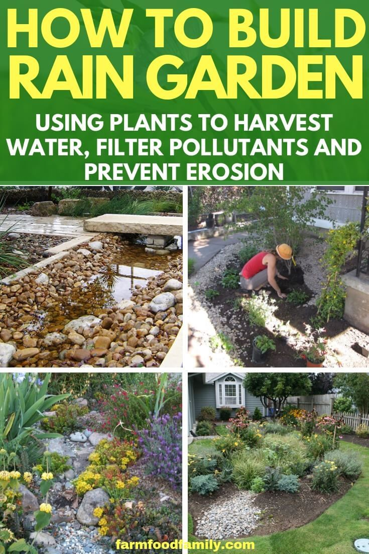 Build Your Own Rain Garden is part of Rain garden - Sometimes runoff water from impervious surfaces will concentrate and cause erosion problems  Rain gardens harvest this water, filter pollutants, and prevent erosion