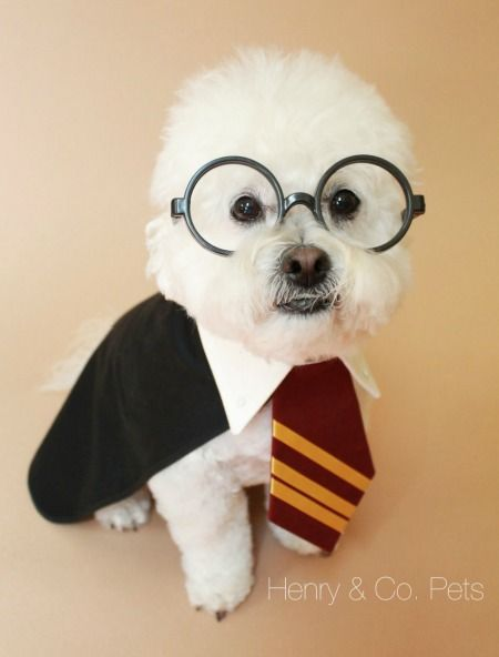 Harry Potter Dog Halloween Costumes.Pin On Books Cute Animals Purrfection