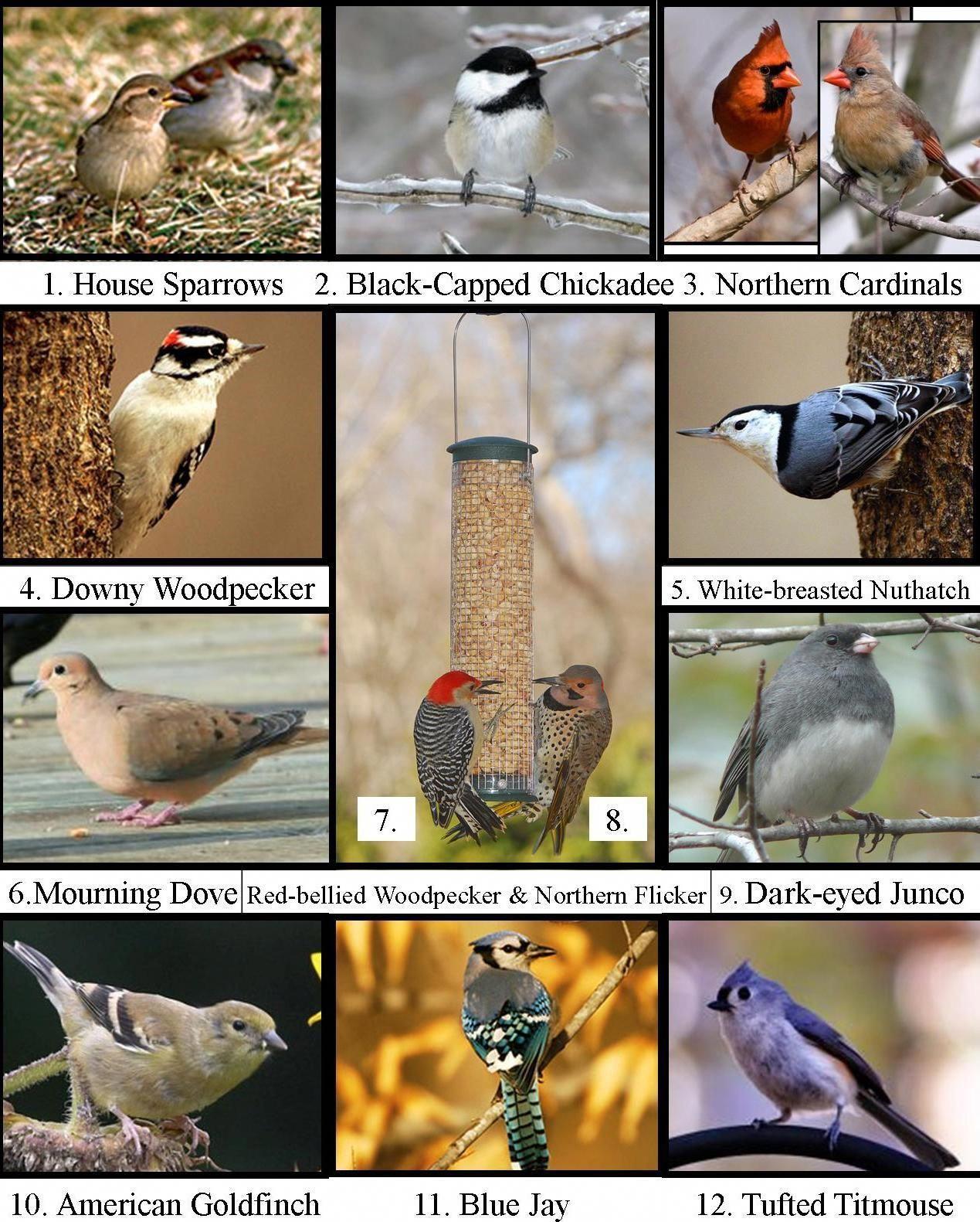 Wild Birds Unlimited Most Common Winter Birds In Michigan Wild Birds Unlimited Winter Bird Backyard Birds