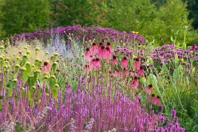 find this pin and more on wild flower garden ideas by mikazuki81