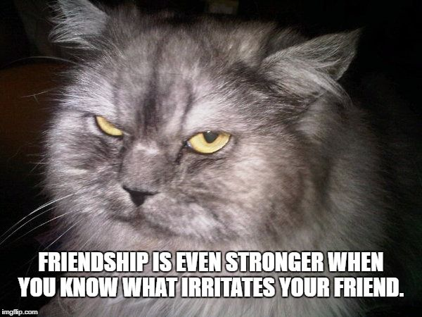 Funny Cat Meme Generator : Irritated cat meme generator imgflip memes i've made pinterest