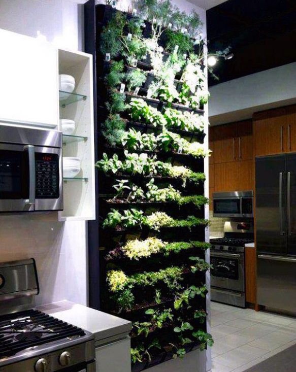 Delicieux Living Herb Wall!