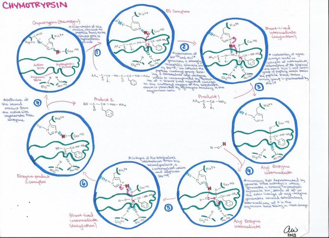 Biochemistry Study Guides In