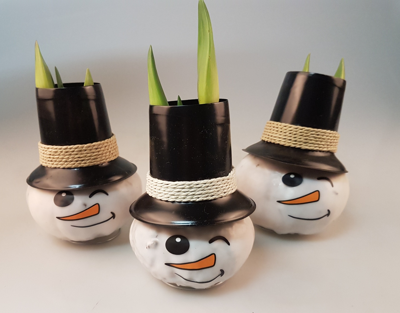 Snow Cute! Snowmen Wax Amaryllis. Grow and Bloom with out