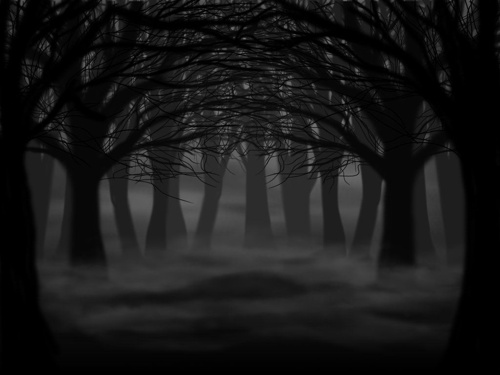 Dark Forest Dark Forest Forest Drawing Forest Background