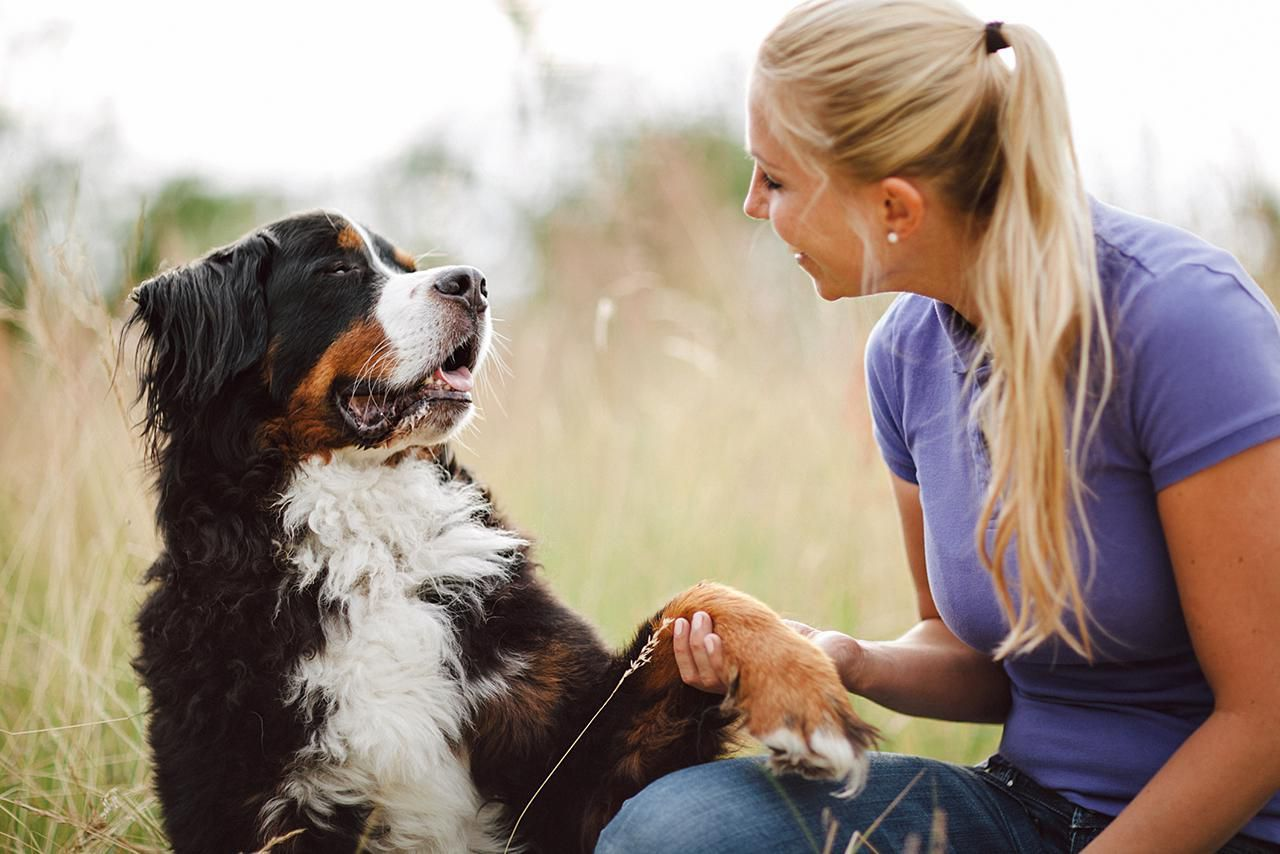 Teach Your Dog To Shake Its Paw With Guests Dog Training Dog