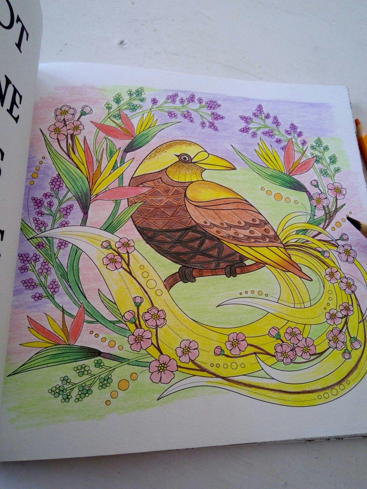 Burung Cendrawasih Mewarnai In 2018 Pinterest