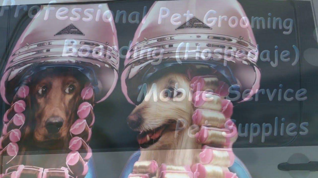 Miami's Pet Grooming Mobile Fleet Pet grooming, Pets