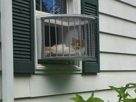 Pet Room Ideas Kitty