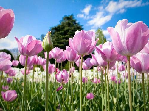 Jolie fleur rose nature jardin #Printemps Fleurs d'#été - #Fleurs #sauvages.#paysage #enchanting ...