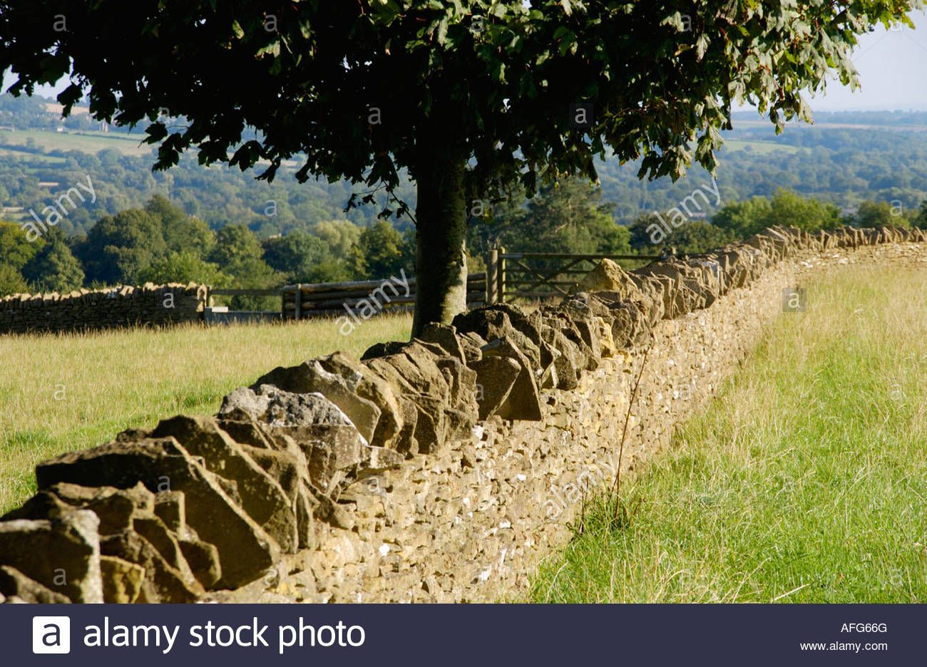 English Countryside - Dry Stone Wall And Tree Near Cotswold Village ...