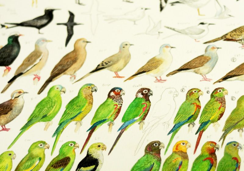 bird-illustrator-miles-mcmullen.jpg (800×561)