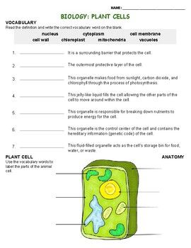 a basic introductory worksheet for the vocabulary and anatomy of plant cells homeschool. Black Bedroom Furniture Sets. Home Design Ideas