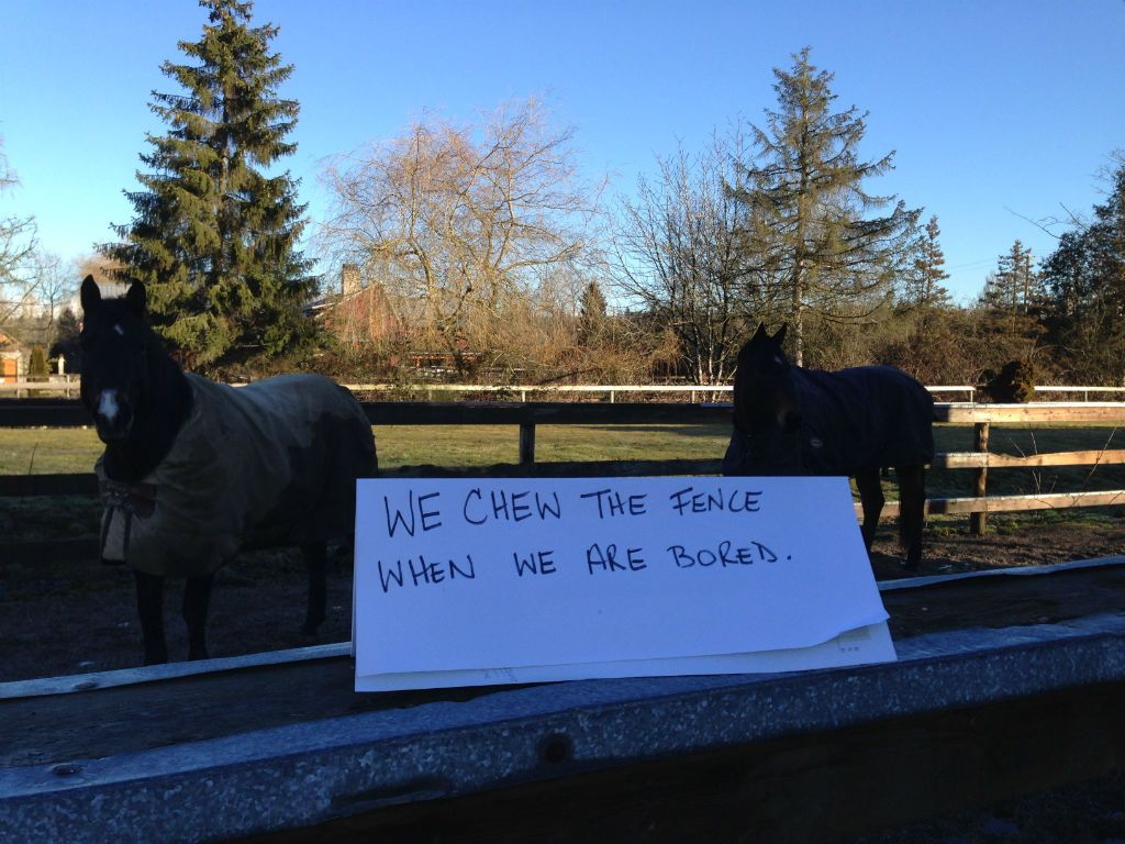 Fence Chewers Anonymous