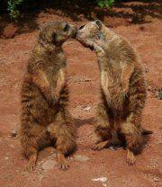 xoxoxo kisses♥...love you Belli!