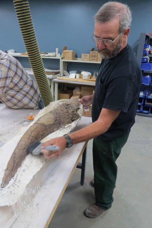 A triceratops brow horn, found in Nebraska, is heading to the South Dakota School of Mines & Technology