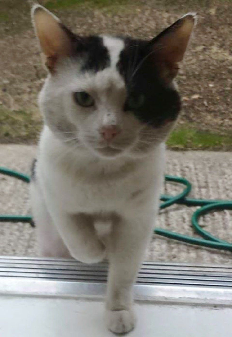 Cat Shows Up On Doorstep After Family Moved In And Changes Their Lives Love Meow Cats Kitten Funny Cats