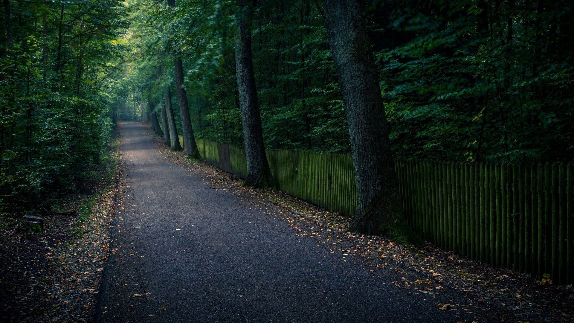 tree path track leaves -#main