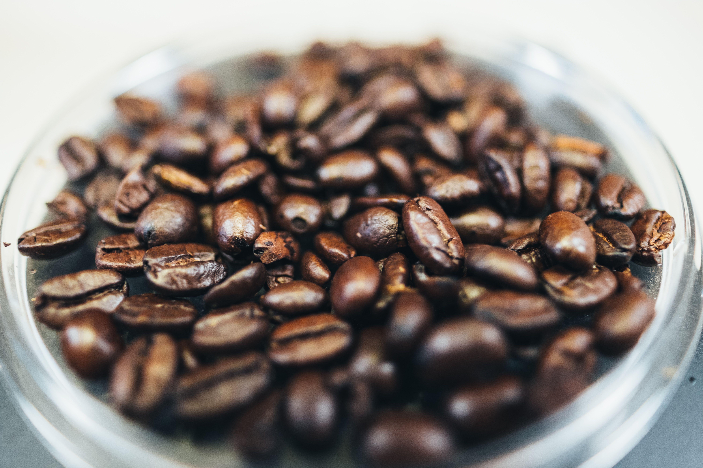 Latino Café Cibetková Káva Kopi Luwak Latino Café Kava Arabica Cz Best Espresso Beans Espresso Beans Fresh Coffee Beans