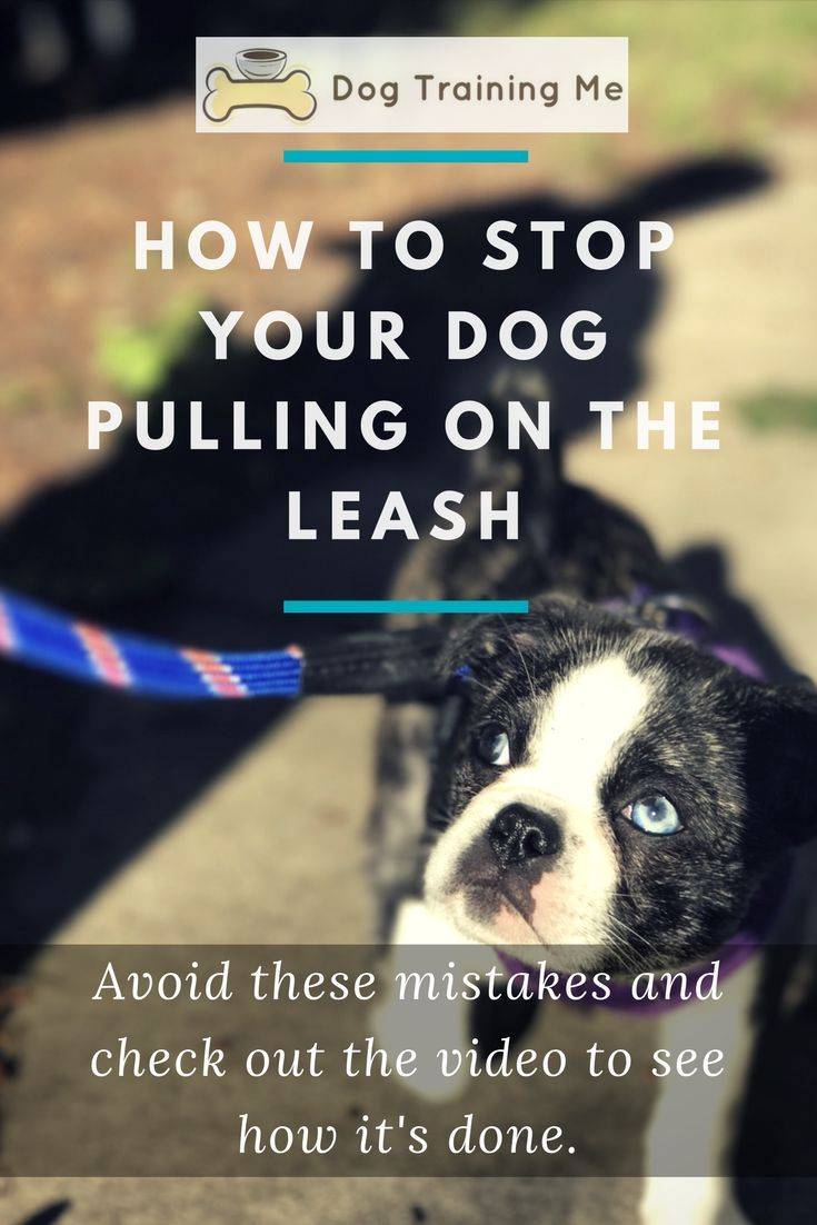 Do you find your dog is pulling on your leash during walks