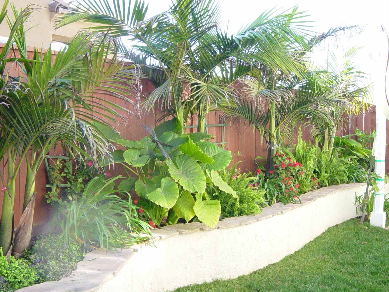 curvy retaining wall with tropical plants