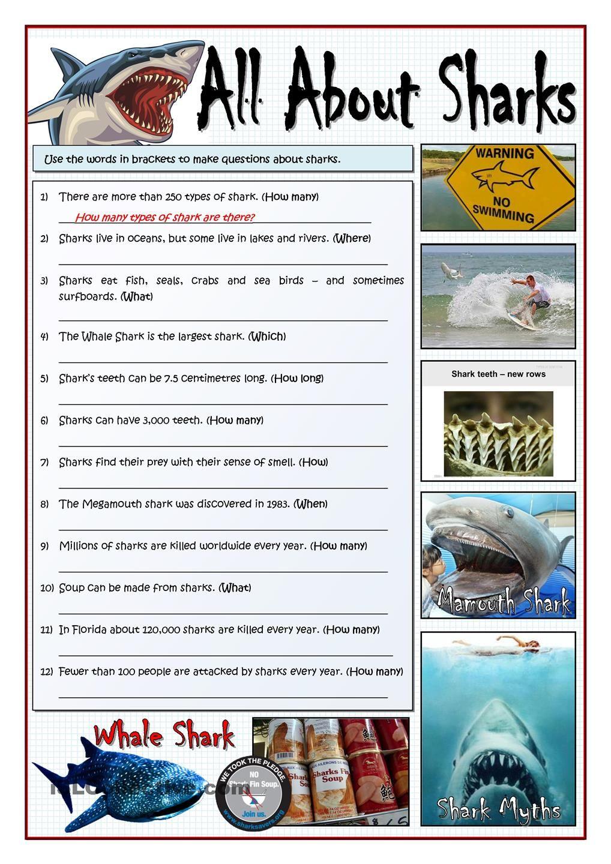 All About Sharks Make Questions All About Sharks Shark Facts Shark Activities [ 1440 x 1018 Pixel ]