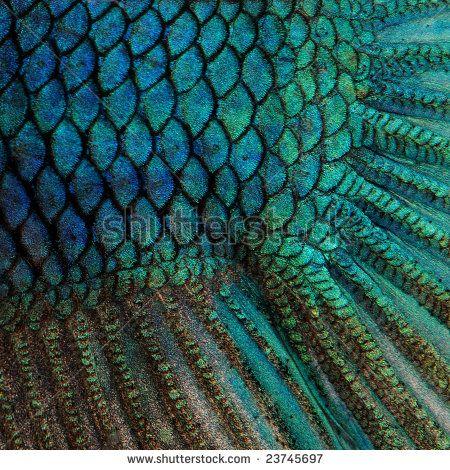 Blue Betta Fish scales close-up.