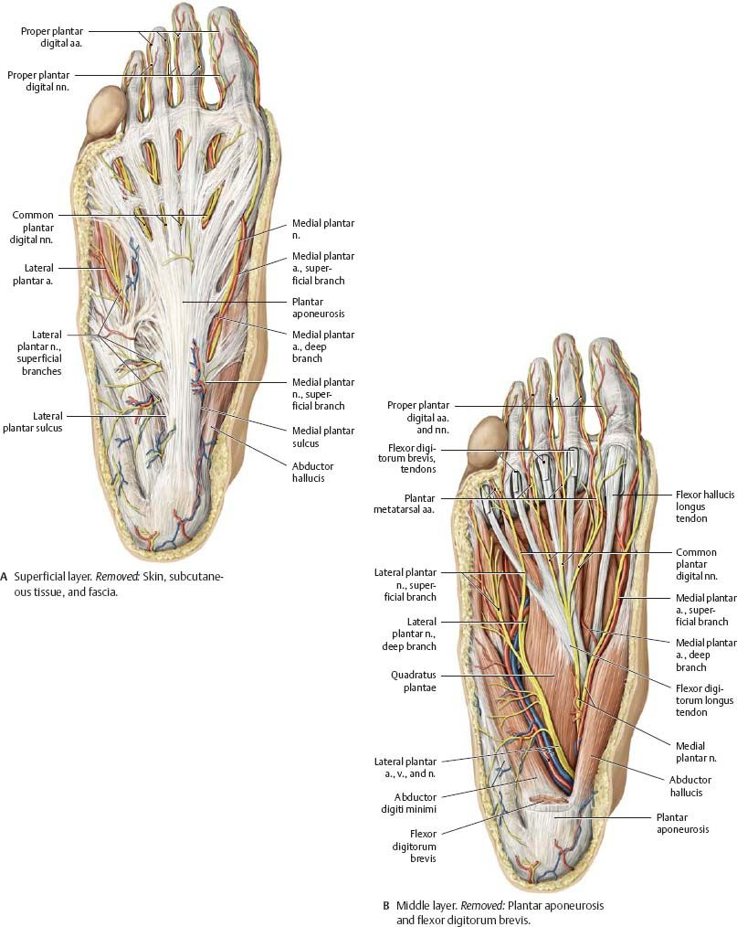 Pin by Kumar Limaye on Spinal L1 to L5 | Pinterest | Anatomy ...