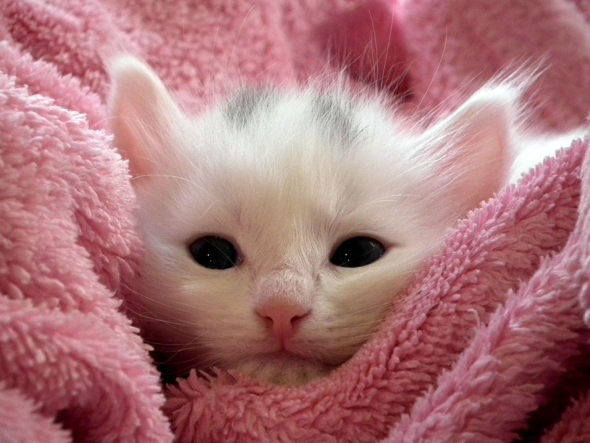 Cute Amazing Cat Photo Chat Chaton Chatons Blancs