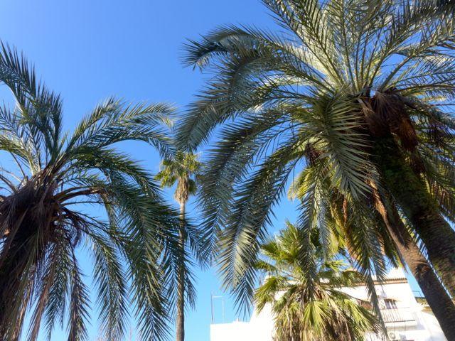 Church And Palms In Cordoba, Spain