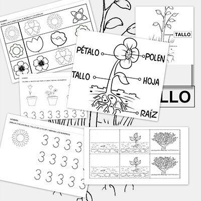 Fichas de actividades para trabajar con las plantas | Kinder español ...