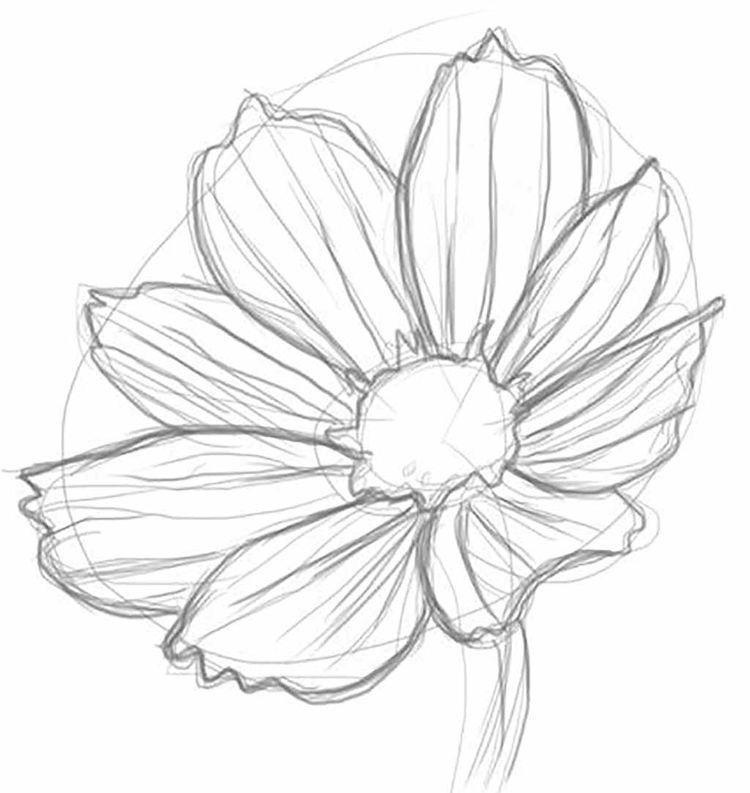 Картинки цветы рисунки карандашом, картинка