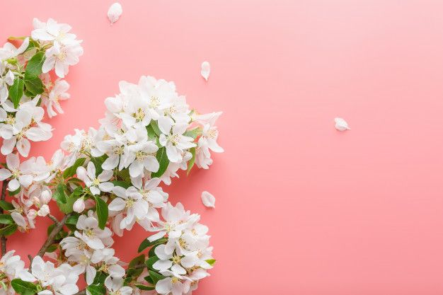 Sakura blooming, spring flowers on pink ... | Premium Photo #Freepik #photo #flower