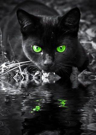 Black Cat Cats Cute Cats Pretty Cats