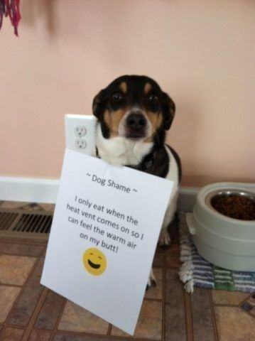 17 All New Photos Of Parents Shaming Their Pets Animal Shaming Dog Shaming Dog Shaming Funny