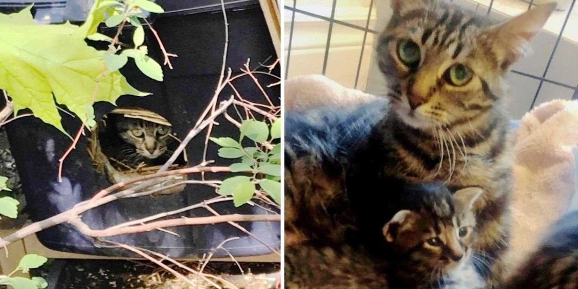 Woman Follows Cat To A Box On Side Of Road And Is Surprised To Find Kittens Inside Cats Kittens Mama Cat