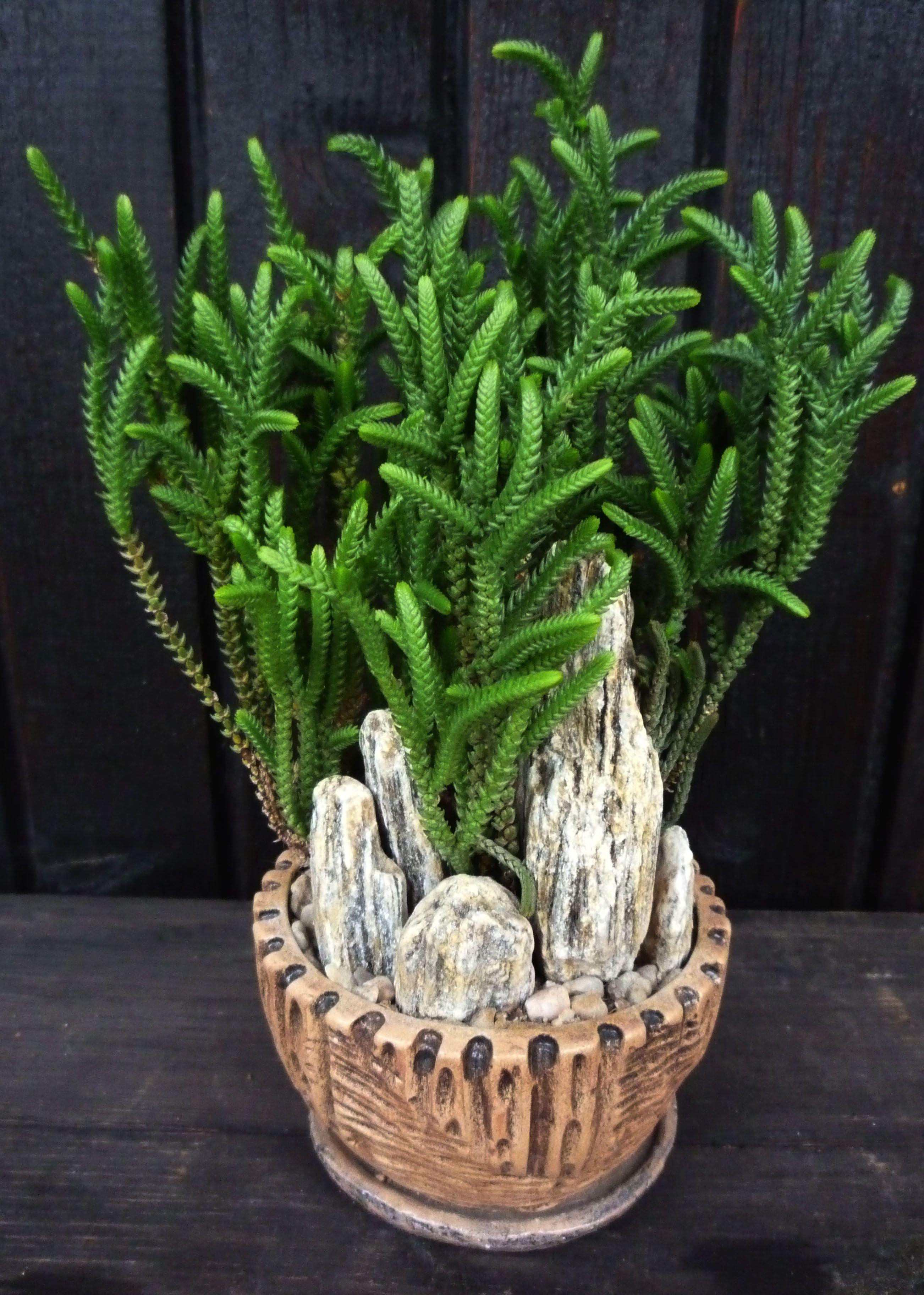 Pin von Karin Rauch auf Karin Sukkulenten, Kaktus blume und Zimmerpflanzen ~ 14014347_Sukkulenten Ableger Pflanzen