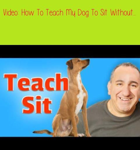 How To Teach My Dog To Sit Without Treatsin This Video I Will