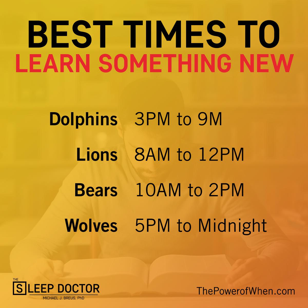Chronotype lion schedule