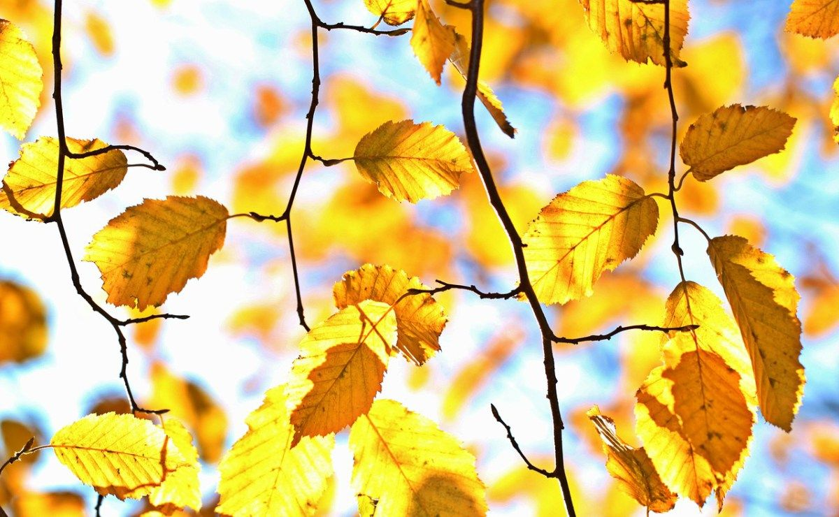 Autumn Gardening What You Need To Do Before Winter